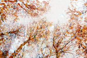 Herbstlaub im Wald im Gegenlicht, close-up