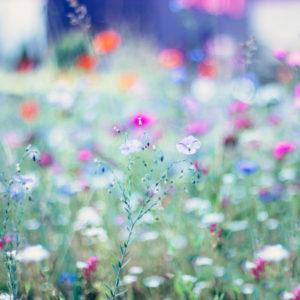 Bunte Blumenwiese im Sommer