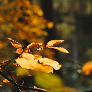 Autumn forest, close-up