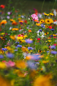 Summer flower meadow