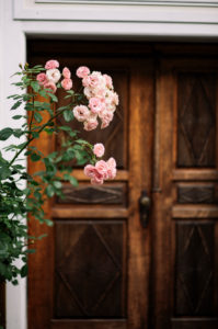 Pink climbing roses in the garden in front of historic wooden door, close-up, Rosa, blurred