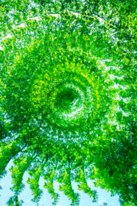 Snail shell from branches, forest composing, deciduous forest, alienated