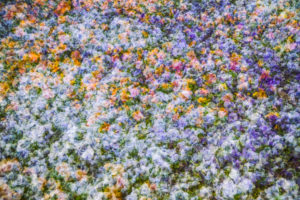 Colorful flower meadow, composing