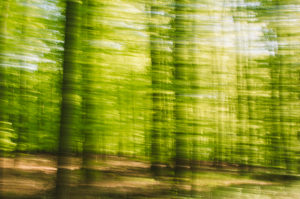 Forest composing, deciduous forest, alienated