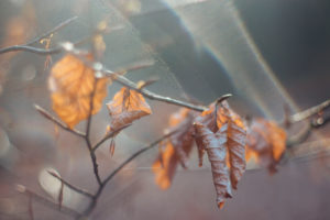 Autumn leaves, close-up