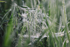 Spinnennetz mit Wassertropfen, close-up