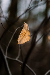 Herbstlaub im Wald, close-up
