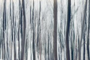 Snowy forest, alienation