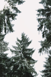 Snowy forest, composing