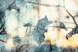 Autumn leaves in the forest, close-up, composing