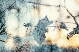 Herbstlaub im Wald, close-up, composing