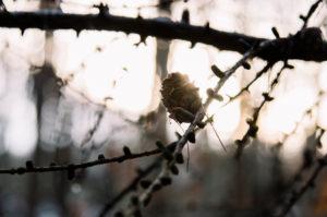 Herbststimmung im Wald, close-up, composing