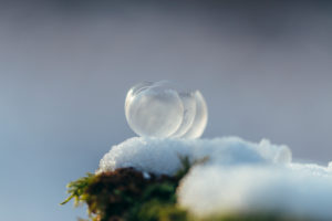 Ice balls in the snow on fir branch, close-up