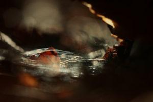 Herbstlaub im Wasser, close-up