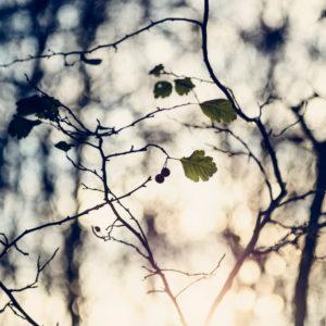Herbstlaub im Gegenlicht, close-up