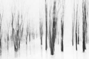 Snowy winter forest, alienation