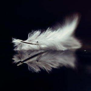 Single bird feather floating in the water, close-up