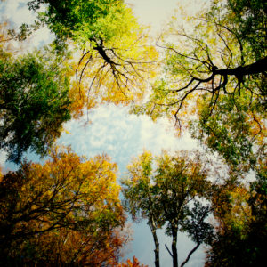 Colorful autumn colors in the forest in the sunset, alienated