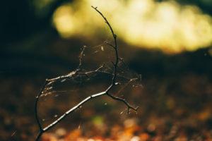 Herbststimmungn im Wald im Sonnenuntergang, close-up