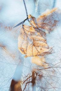 autumnal leaves, close-up, alienation, nature art