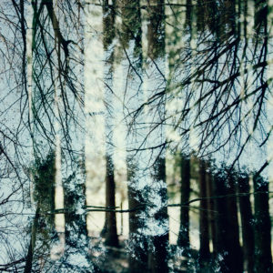Deciduous and coniferous trees in the forest, alienation, nature art