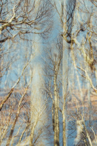 Deciduous trees in the forest, alienation, nature art