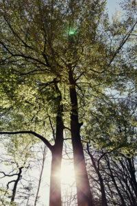Laubbäume im Wald im Herbst