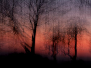 Forest at sunset, alienated, nature art