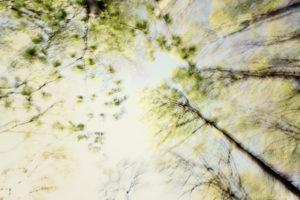 Forest, treetops, from below, alienation