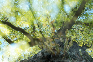 Nature details, Forest in summer, composing, alienation