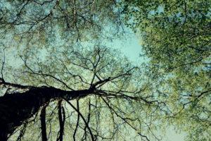 Nature details, Forest in summer, alienation