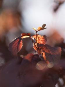 Herbstlaub, close-up
