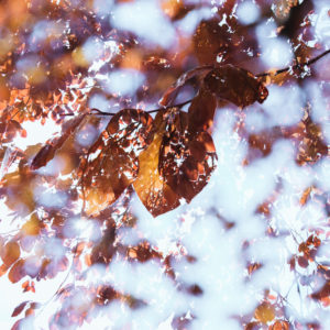 Colorful autumn leaves, close-up, composing, alienation
