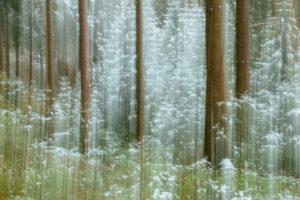 Wald, Unschärfe, Silberbachtal in Horn-Bad Meinberg, NRW.