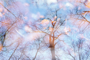 Deciduous trees, bare, multiple exposure