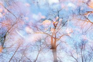 Laubbäume, kahl, Mehrfachbelichtung