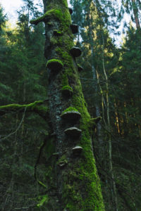 Wald, Bäume, Moos, Silberbachtal in Horn-Bad Meinberg, NRW.