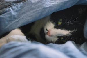 Bett, Katze, zugedeckt
