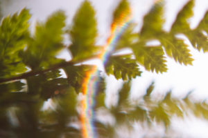 Fern, detail, leaf, blur