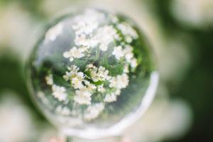 Zweig, Blätter, Blüten, Detail,  Kugel