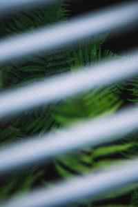 Fern, detail, streaks, blur