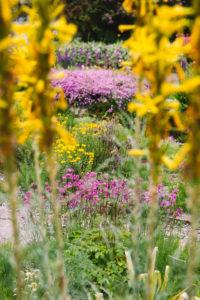 Blumenvielfalt im Botanischen Garten in Bielefeld im Mai