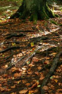 Teutoburg Forest in the Silberbach Valley in Horn-Bad Meinberg, North Rhine-Westphalia, Germany