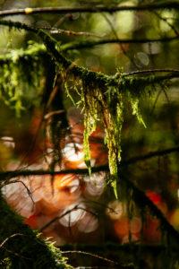 Teutoburger Wald im Silberbachtal in Horn-Bad Meinberg, Nodrhein-Westfalen, Deutschland