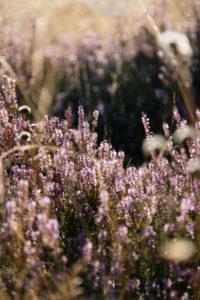 Die Mossheide in Augustdorf, Senne, Nordrhein-Westfalen, Deutschland