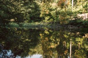Teutoburg Forest around the Externsteine in Horn-Bad Meinberg, North Rhine-Westphalia, Germany