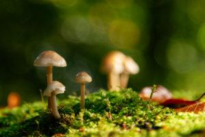 Unterwegs im Teutoburger Wald rund um die Externsteine in Horn-Bad Meinberg, Nordrhein-Westfalen, Deutschland