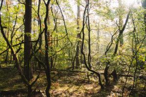 Unterwegs im Teutoburger Wald in Oerlinghausen, Nordrhein-Westfalen, Deutschland
