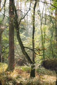 The Teutoburg Forest in Oerlinghausen, North Rhine-Westphalia, Germany