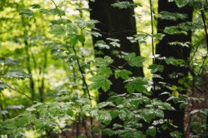 Teutoburg Forest in Bielefeld, North Rhine-Westphalia, Germany, around the Botanical Garden